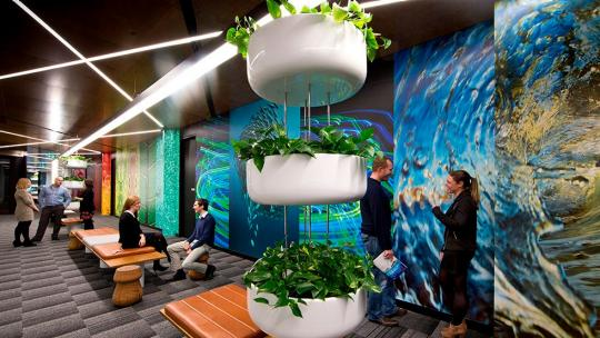 Canon sustainable workplace plants