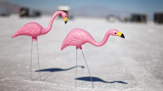 Pink flamingos crossing the street