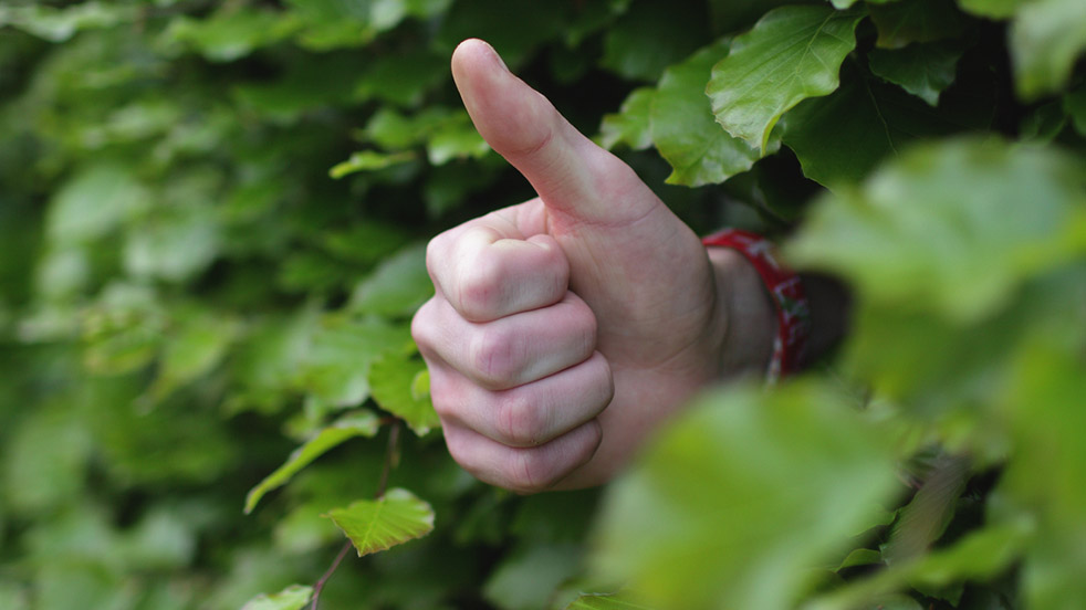 Hand doing a thumbs up appearing from a bush